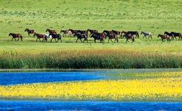 Cavalo pelo lakeshare Imagem de Stock