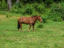 Cavalo pequeno estando seguinte a floresta fotografia de stock royalty free