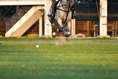 Cavalo Polo Ball no fósforo imagens de stock royalty free