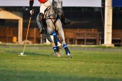 Cavalo Polo Player Use um malho foto de stock
