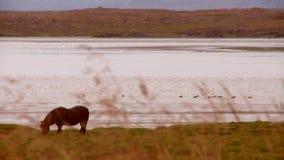 Cavalo por um lago video estoque
