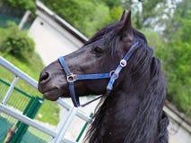 Cavalo preto foto de stock royalty free