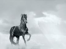 Cavalo preto Imagem de Stock Royalty Free