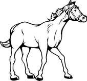 Cavalo preto e branco. Imagem de Stock