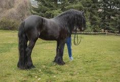 Cavalo preto no fest búlgaro da igreja - dia do ` s do St Theodore foto de stock royalty free