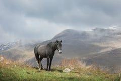 Cavalo preto que pasta nas montanhas de Ossetia norte Foto de Stock