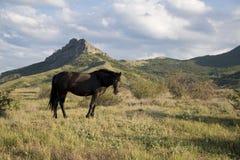 Cavalo preto só Imagens de Stock