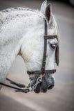 Cavalo principal Fotos de Stock