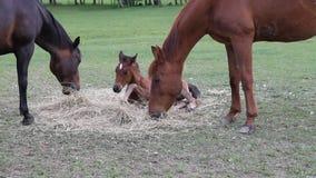 Cavalo que come o feno filme