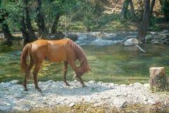 Cavalo que corre em torno da água imagem de stock royalty free