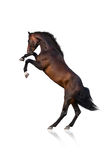 Cavalo que eleva acima Imagens de Stock