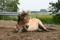 Cavalo que encontra-se na areia fotografia de stock