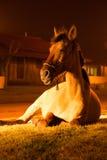 Cavalo que encontra-se na rua Fotos de Stock