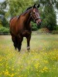 Cavalo que está nas flores imagens de stock royalty free