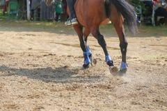 Cavalo que galopa no prado Fim acima fotos de stock