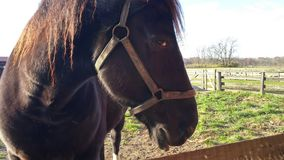Cavalo que olha me imagens de stock royalty free