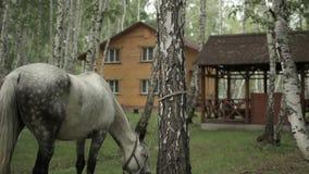 Cavalo que pasta vídeos de arquivo