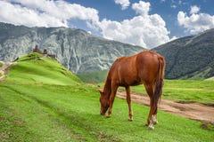 Cavalo que pasta ao lado da igreja de trindade de Gergeti (Gergeti, Geórgia) Imagem de Stock