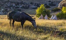 Cavalo que pasta apenas fora do acampamento imagens de stock