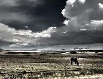Cavalo que pasta com thunderheads Imagem de Stock