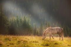 Cavalo que pasta em um prado verde nas montanhas cobertas com a floresta fotos de stock