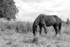 Cavalo que pasta no dia de saída Imagem de Stock Royalty Free