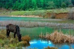 Cavalo que pasta perto do doxa do lago em Peloponnese Grécia Imagens de Stock Royalty Free