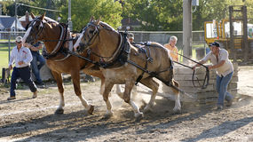 Cavalo que puxa a competição Fotografia de Stock Royalty Free