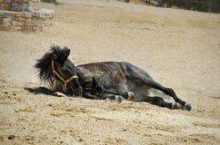 Cavalo quebrado foto de stock