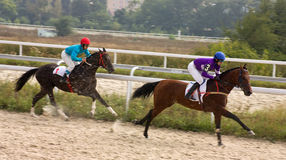 Cavalo Racing Fotografia de Stock