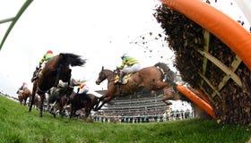 Cavalo Racing Imagens de Stock