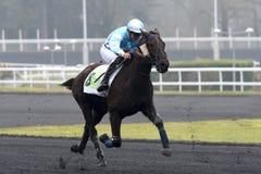 Cavalo Racing Imagem de Stock