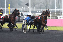 Cavalo Racing Imagens de Stock Royalty Free