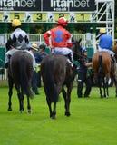 Cavalo Racing para baixo no início Imagem de Stock Royalty Free