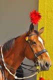 Cavalo real que guarda o palácio Imagens de Stock Royalty Free
