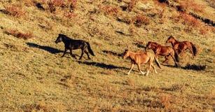 Cavalo Running Foto de Stock Royalty Free