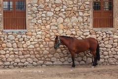 Cavalo só Imagem de Stock