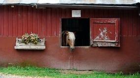 Cavalo só Fotos de Stock
