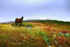 Cavalo só na grama vermelha Paisagem com um cavalo Imagens de Stock Royalty Free