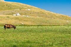 Cavalo só no campo Fotografia de Stock