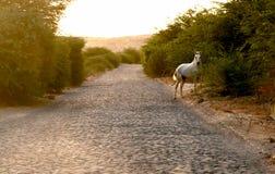 Cavalo selvagem Foto de Stock