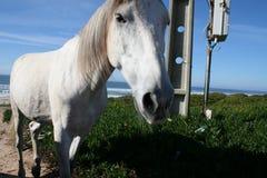 Cavalo selvagem foto de stock royalty free