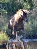 Cavalo selvagem imagens de stock