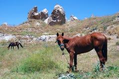Cavalo selvagem em Cappadocia imagem de stock