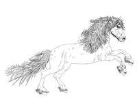 Cavalo à seção preto e branco, Imagem de Stock Royalty Free