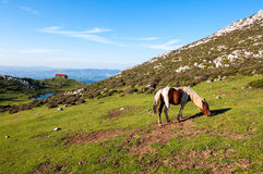 Cavalo sobre a montanha Monsacro, com a capela do fundo de Magdalena Imagem de Stock