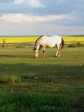 Cavalo solitário no crepúsculo fotografia de stock