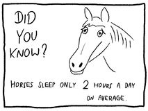 Cavalo sonolento Fotografia de Stock