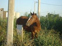 Cavalo surpreendido pela câmera imagens de stock royalty free