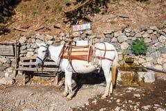 Cavalo usado para transportar turistas cansados em Samaria Gorge Imagem de Stock